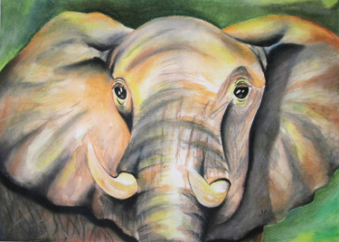 Print - elefant - Remembering the Truth